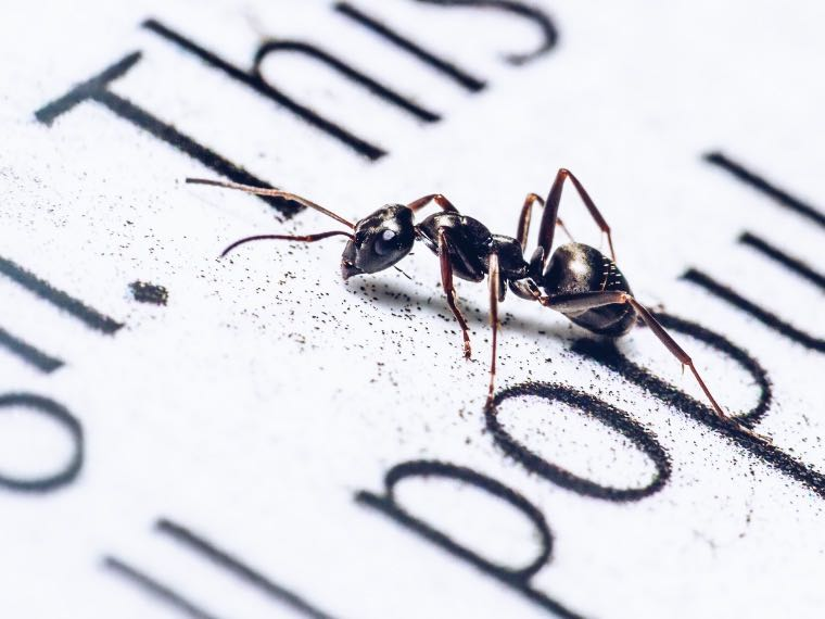 Ant on a book page